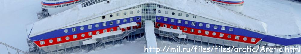 arktyczna koniczyna